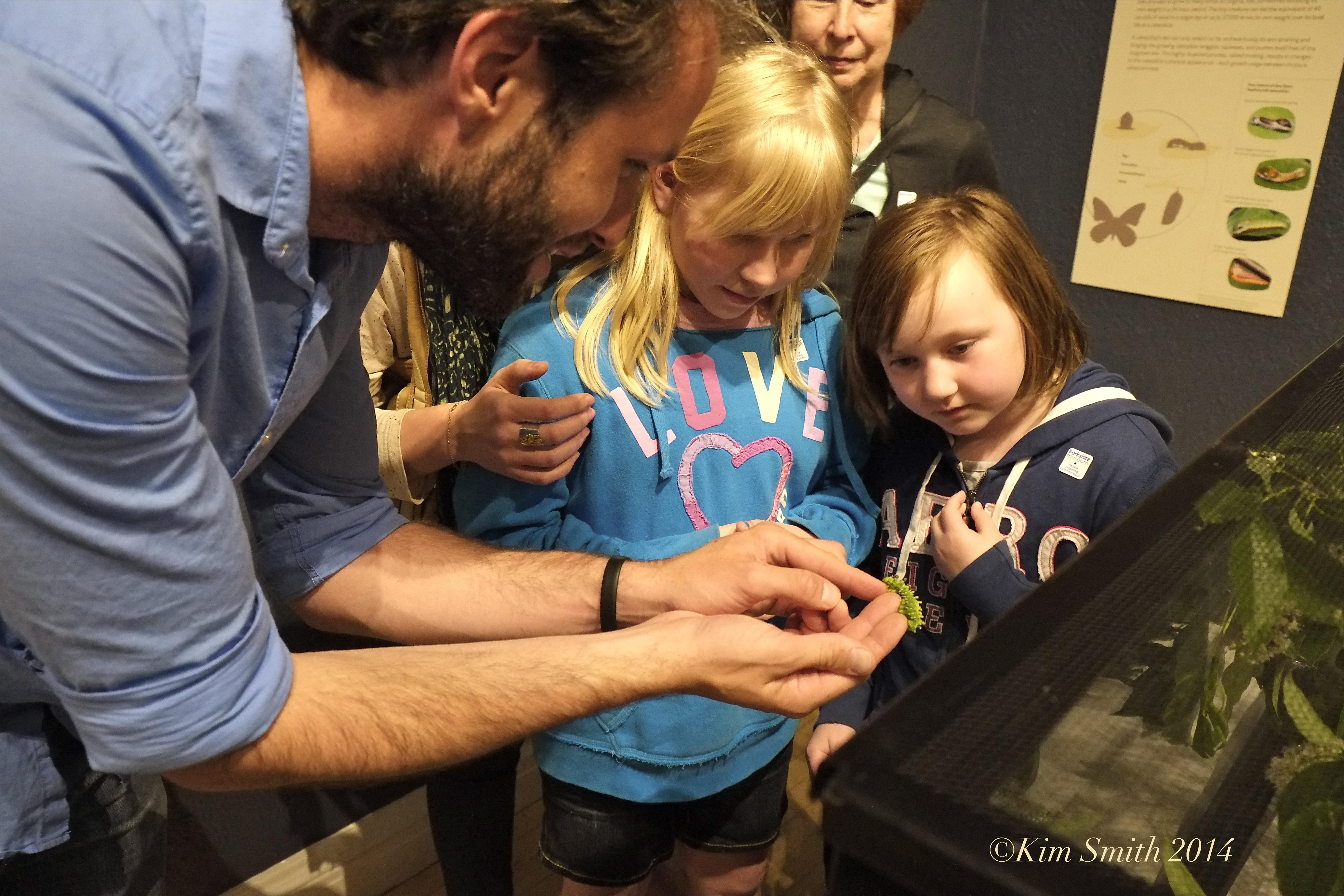 Kim Smith Berkshire Museum Butterflies ©Kim Smith 2014
